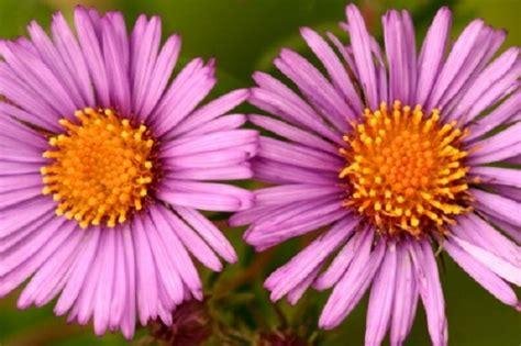 fiori e piante autunnali fiori autunnali 5 piante da vaso per il balcone