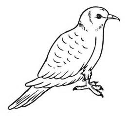 coloring pages of free printable pigeon coloring pages for