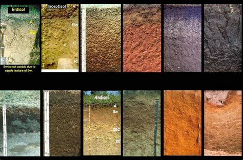 jenis jenis tanah  indonesia masbidinnet
