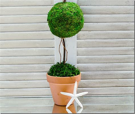 how to make a topiary how to make a topiary it all started with paint