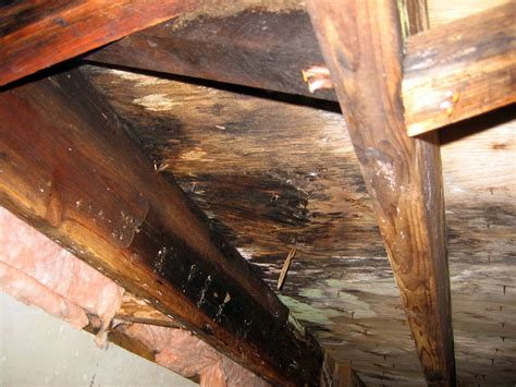 How To Insulate Floor Joists In Crawl Space by Our Crawl Space Dehumidifiers