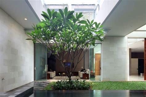 ruhevollen indoor garten anlegen welche pflanzen eignen