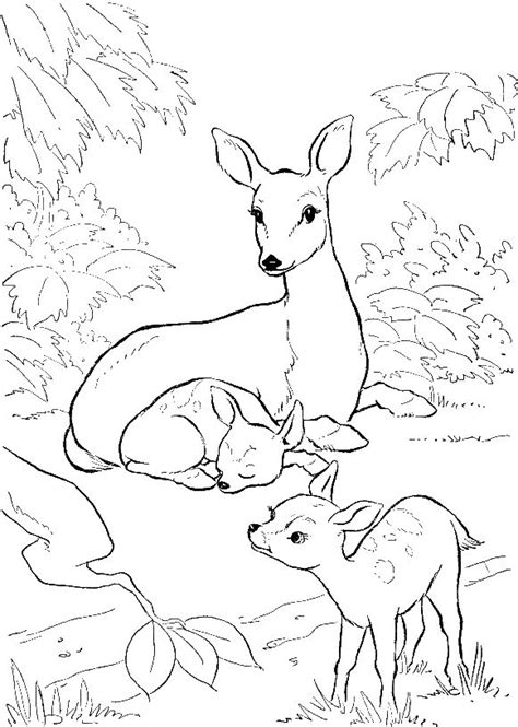 deer family coloring page 1000 images about food art on pinterest