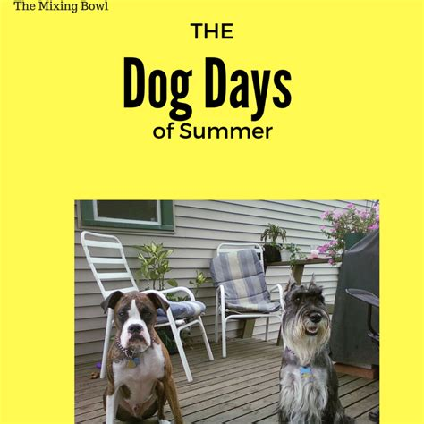 dogs days are days of summer outside the lab