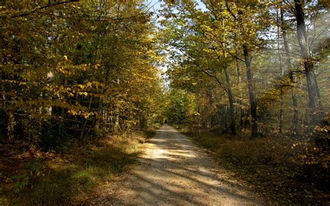 autumn forest path leaves wallpapers autumn forest path