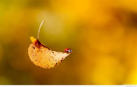quotes autumn wallpapers images  pics