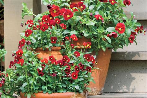 southern living container gardening southern living container gardening ideas photograph spect