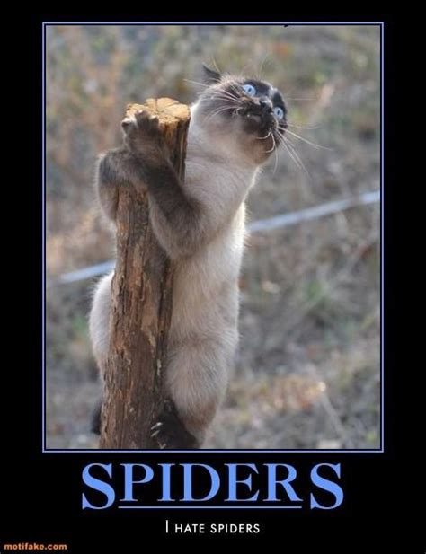 Funny Spider Meme - funny cat i hate spiders jokes memes pictures
