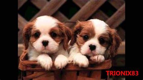 imagenes bellas de animales imagenes bonitas y tiernas los perros mas bonitos del