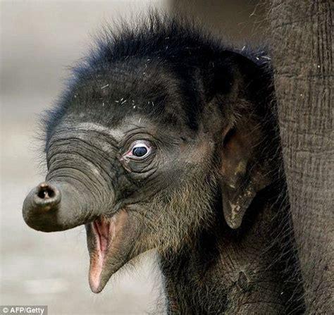 Gajah Lucu 15 foto lucu kelakuan bayi gajah ini bikin harimu cerah