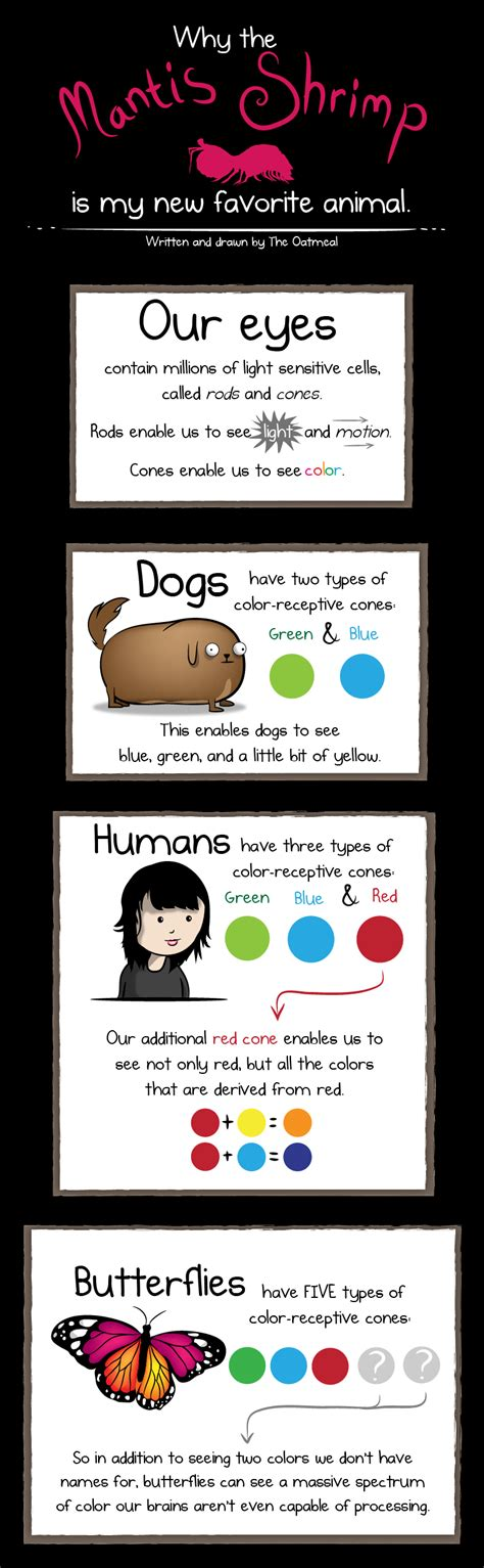 the oatmeal why the mantis shrimp is my new favorite animal the oatmeal