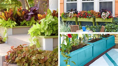 creative planters containers and window boxes