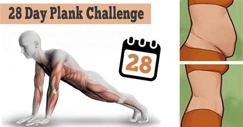 plank challenge exercise 28 day plank challenge to tone abs back and shoulders