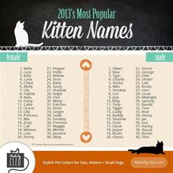 infographic most popular kitten names 2013 shows top