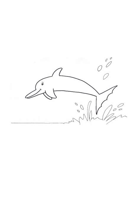 dolphin tale printable coloring pages freecoloring4u com
