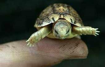 Teflon Ukuran Paling Kecil 10 hewan dengan ukuran paling kecil dan lucu di dunia