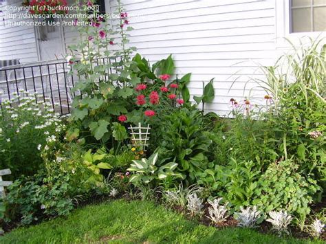 backyard flower beds garden design my small house backyard flower beds 1 by