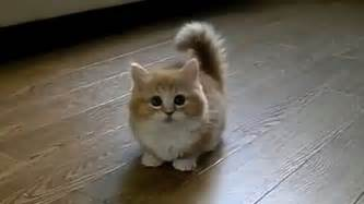 TOP 10 BEST CAT VIDEOS OF ALL TIME! - YouTube Bestofcats