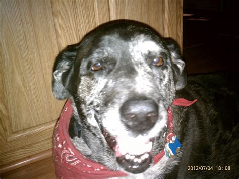 nasal cancer in dogs cancer and alternative treatments july 2012