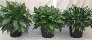 plants plant care inc