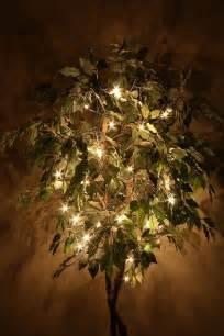 lighted artificial trees lighted ficus trees la d 233 pendance du ficus