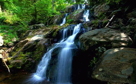 imagenes 3d bosques peque 241 a cascada en el bosque im 225 genes y fotos
