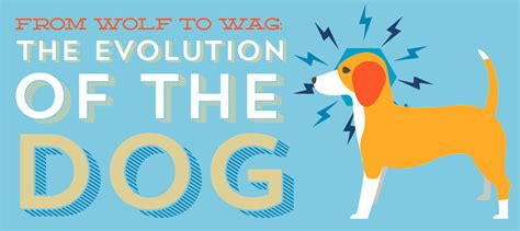 the evolution of dogs evolution of the science buzz