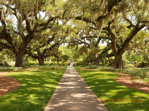 brookgreen gardens myrtle sc myrtle