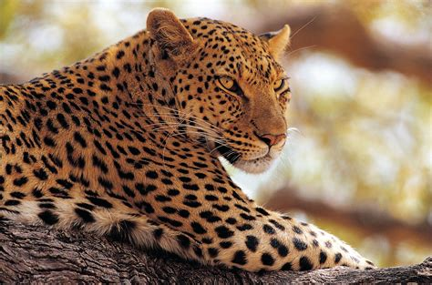 imagenes de animales salvajes gratis banco de im 193 genes animales salvajes 16 fotograf 237 as en