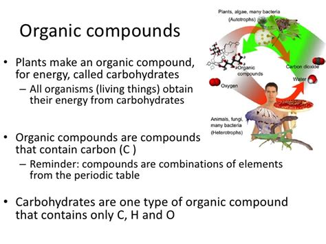 What Is An Organic Compound Organic Compounds And Plants