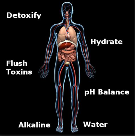 Alkaline Water For Detox by Benefits Of Alkaline Water For Detoxification