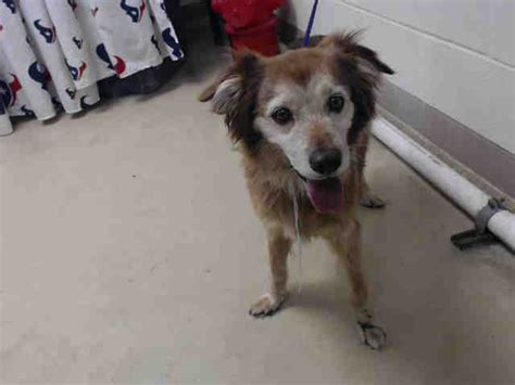 houston pound this id a463166 located at harris county animal shelter in houston
