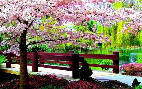Google Wallpaper Spring | spring nature wallpapers google search nature