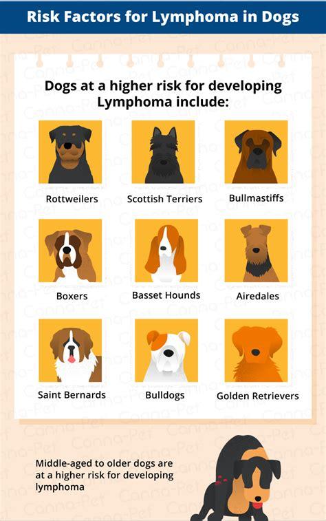 golden retriever swollen lymph nodes lymphoma in dogs canna pet
