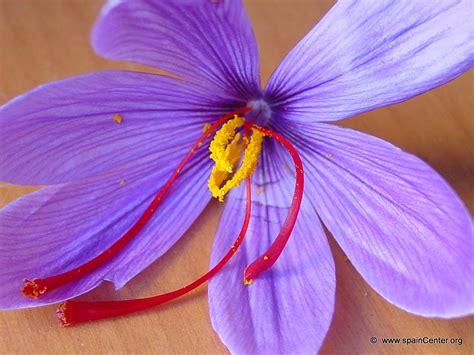 libro la flor del azafrn azafran de la mancha espa 241 a
