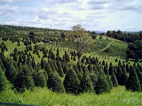 slatington pa christmas tree farm in slatington pa