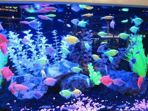 glofish colors look at all the different colors glofish fish aquarium