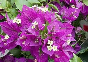 plus de fleurs pour les plantes d int 233 rieur