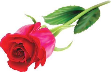 imagenes de rosas rojas vintage 174 colecci 243 n de gifs 174 04 22 15