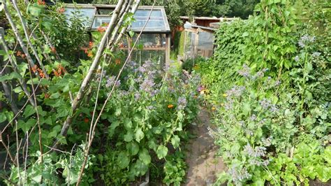 self sustaining garden kate fox sustainable self sufficiency