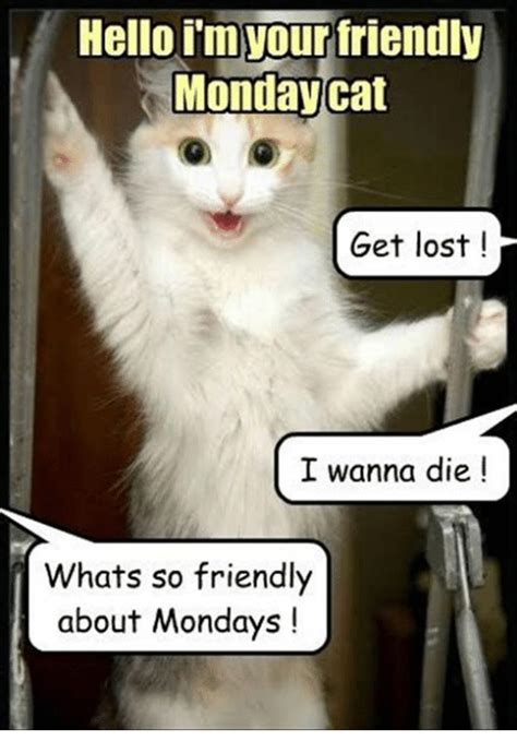 Monday Cat Meme - hello im tour friendly monday cat get lost i wanna die
