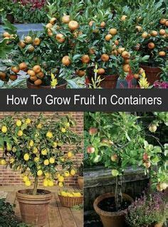 how to grow grapes in your backyard how to grow grapes in your backyard how to grow vines