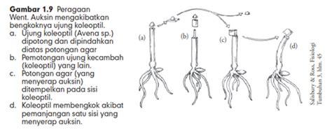Hormon Zpt Giberelin hormon tumbuhan atau zpt zat pengatur tumbuh cara budidaya