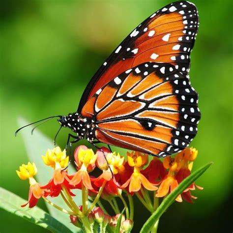 Cd Link Kupu Kupu belajar dari kupu kupu oleh irene cynthia hadi