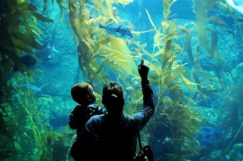 Home Aquarium birch aquarium at scripps home