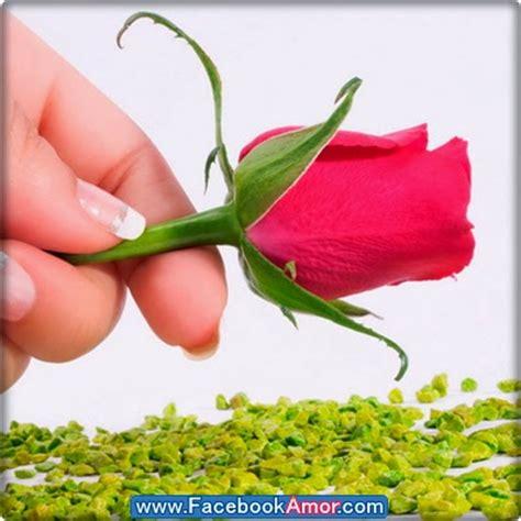 imagenes para perfil flores imagenes bonitas para perfil de facebook im 225 genes