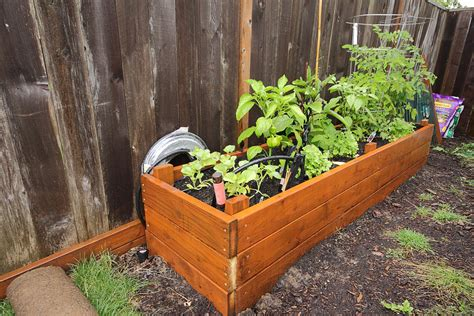 container gardening peppers growing peppers in your container vegetable garden