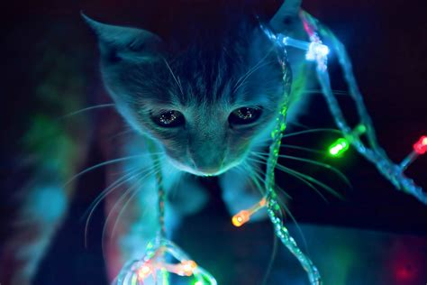 3d animated cat in winter christmas lights hd background