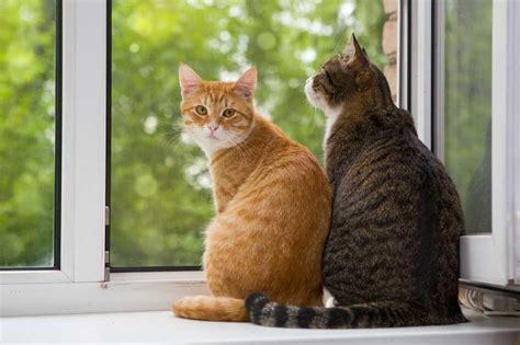 una noche un gato descubre c 243 mo se comporta un gato fundaci 243 n affinity