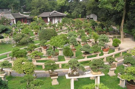 file bonsai forest at the gardens of pagoda yunyan ta jpg wikipedia